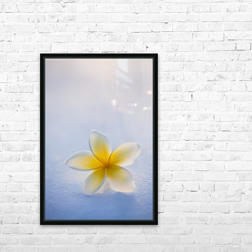 Close-up of a single beautiful yellow Plumeria flower (Apocynaceae) in soft focus; Honolulu, Oahu, Hawaii, United States of America HD Sublimation Metal print with Decorating Float Frame (BOX)