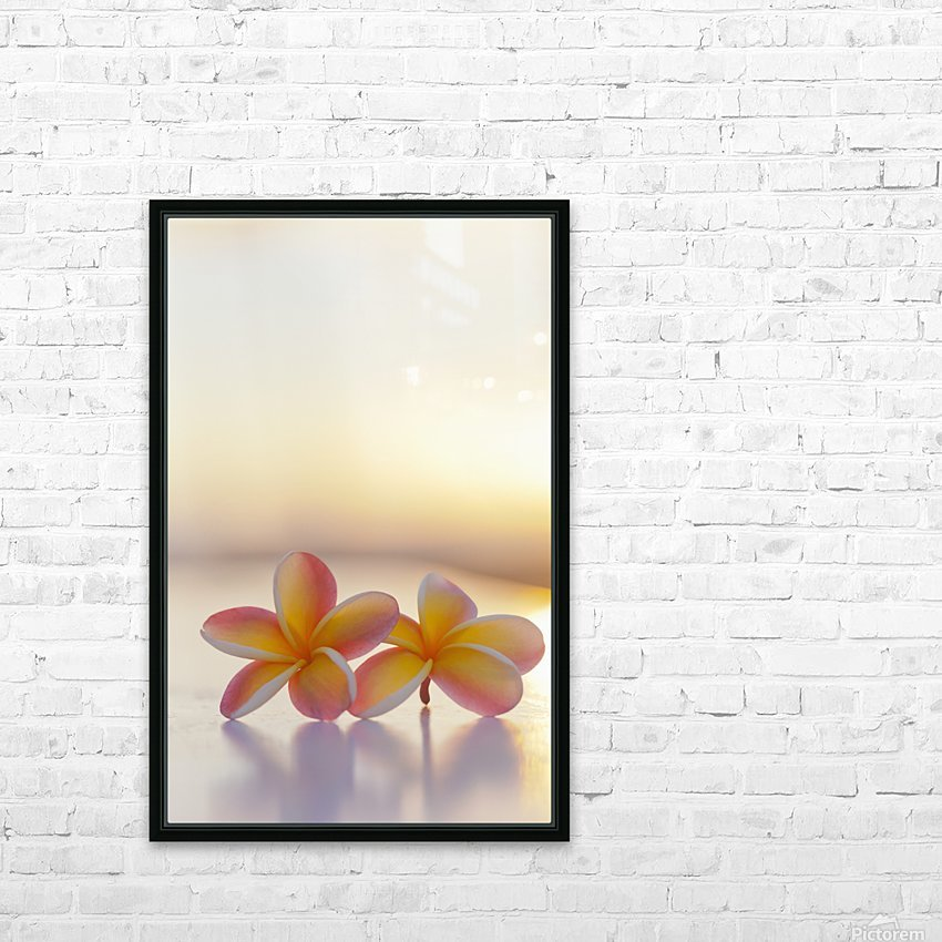 Close-up of a pair of beautiful yellow and pink Plumeria flowers (Apocynaceae) with sunset lighting the background; Honolulu, Oahu, Hawaii, United States of America HD Sublimation Metal print with Decorating Float Frame (BOX)