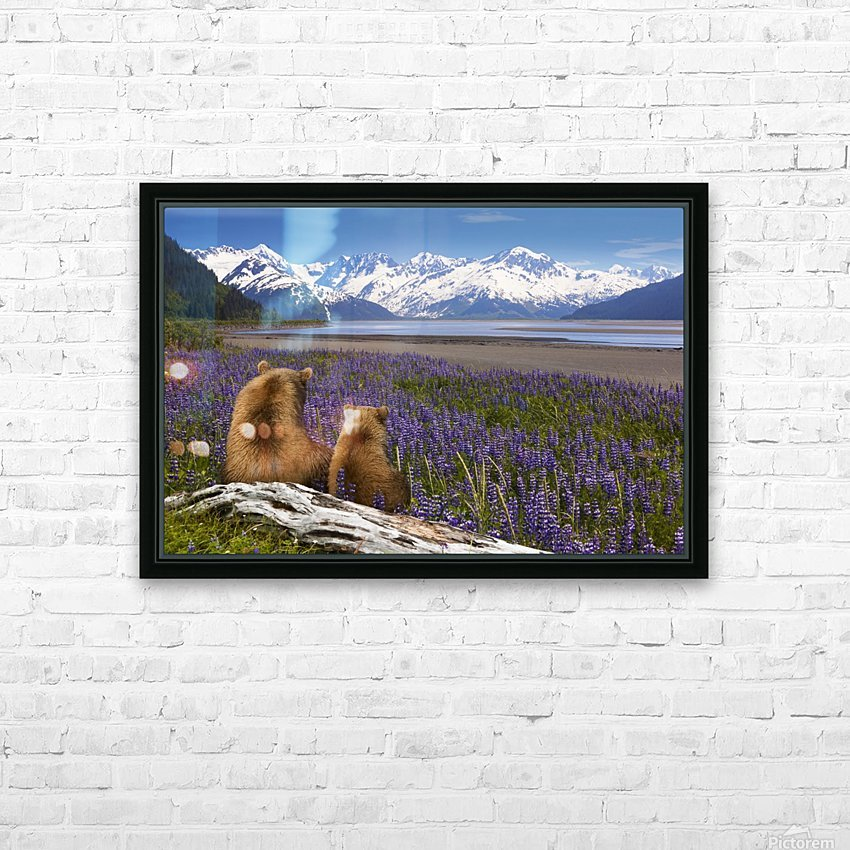 COMPOSITE: Grizzly Sow & cub sit in lupine along Seward Highway, Turnagain Arm, Southcentral Alaska HD Sublimation Metal print with Decorating Float Frame (BOX)