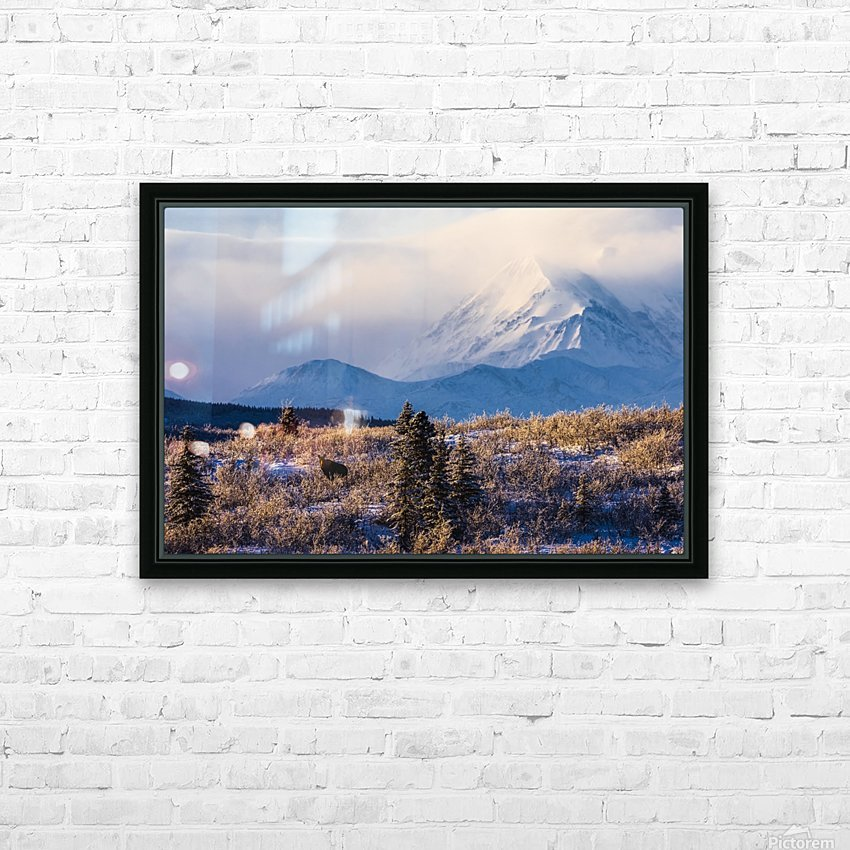 A moose (alces alces) forages on a winter morning with the Alaska Range in the background partially enshrouded in clouds; Alaska, United States of America HD Sublimation Metal print with Decorating Float Frame (BOX)
