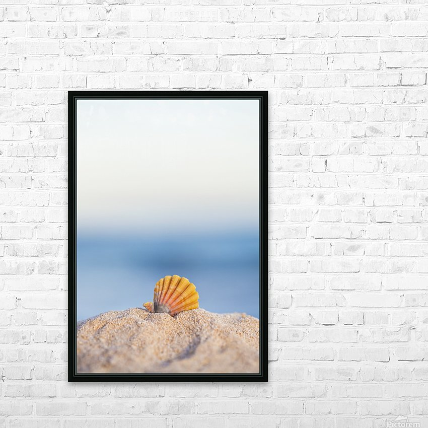 A rare rainbow color Hawaiian Sunrise Scallop Seashell, also known as Pecten Langfordi, in the sand at the beach at sunrise; Honolulu, Oahu Hawaii, United States of America HD Sublimation Metal print with Decorating Float Frame (BOX)