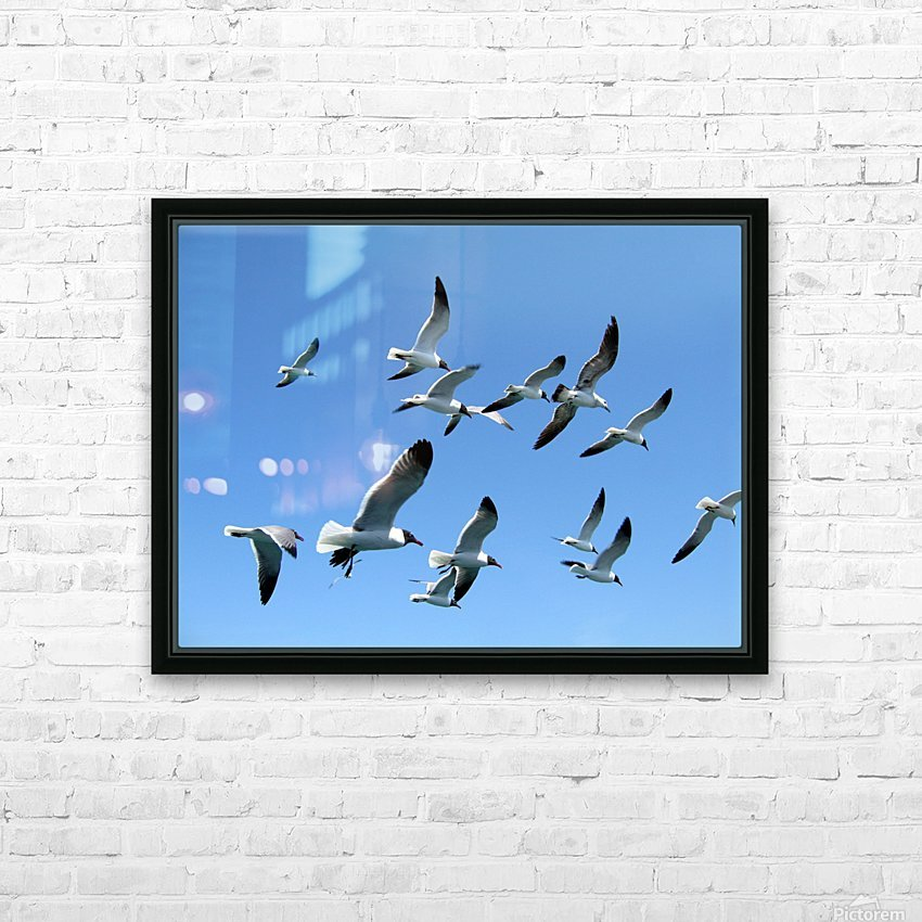 Seagulls against a clear blue sky HD Sublimation Metal print with Decorating Float Frame (BOX)