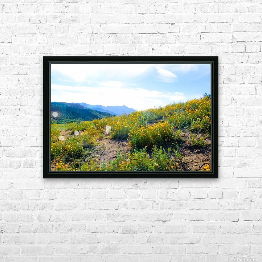 yellow poppy flower field with green leaf and blue cloudy sky in summer HD Sublimation Metal print with Decorating Float Frame (BOX)