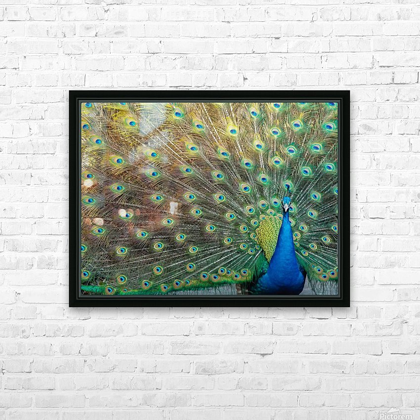 Peacock Feathers Full Frame HD Sublimation Metal print with Decorating Float Frame (BOX)