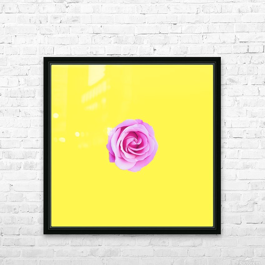 closeup pink rose with yellow background HD Sublimation Metal print with Decorating Float Frame (BOX)
