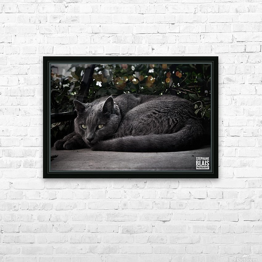 Charlie the Cat HD Sublimation Metal print with Decorating Float Frame (BOX)