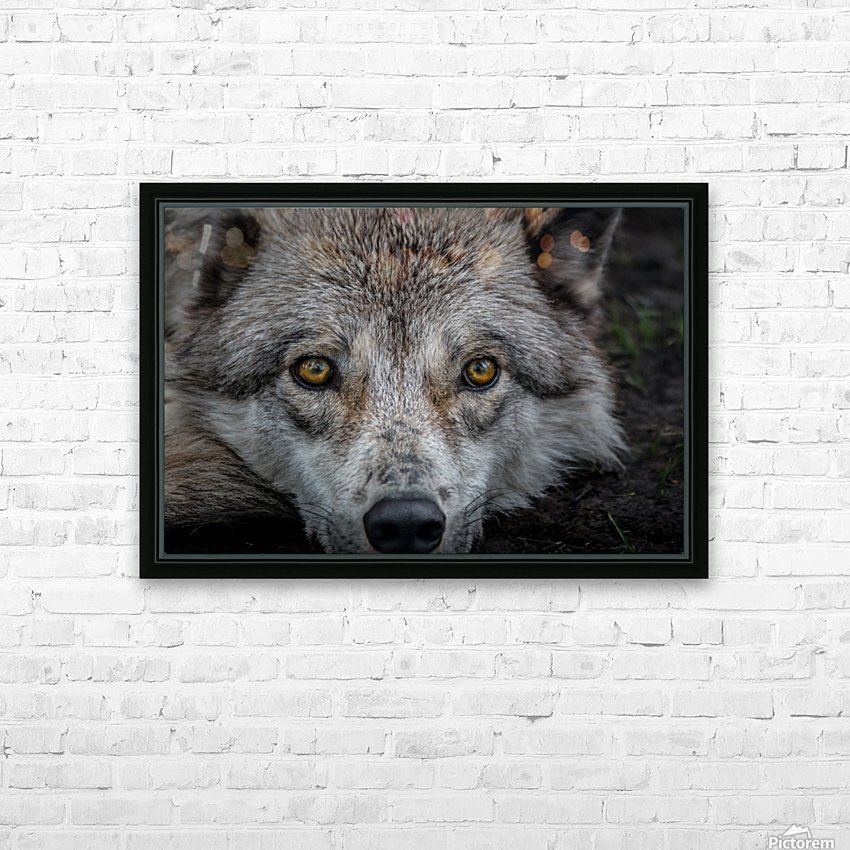 WolfDog2 HD Sublimation Metal print with Decorating Float Frame (BOX)