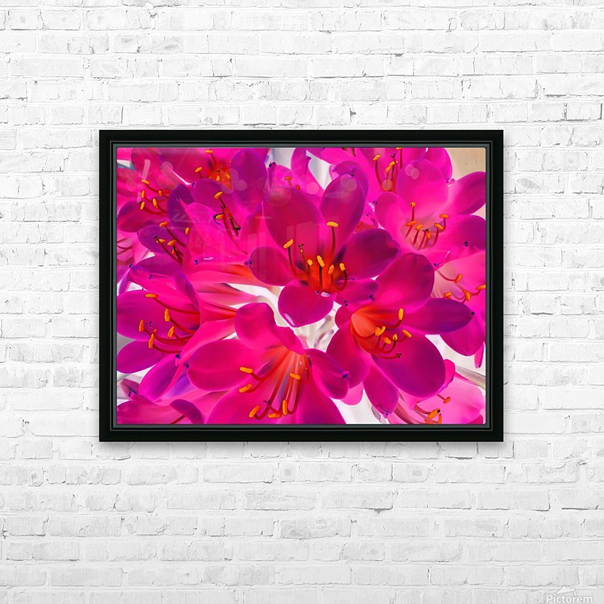 closeup pink flower texture abstract background with orange pollen HD Sublimation Metal print with Decorating Float Frame (BOX)