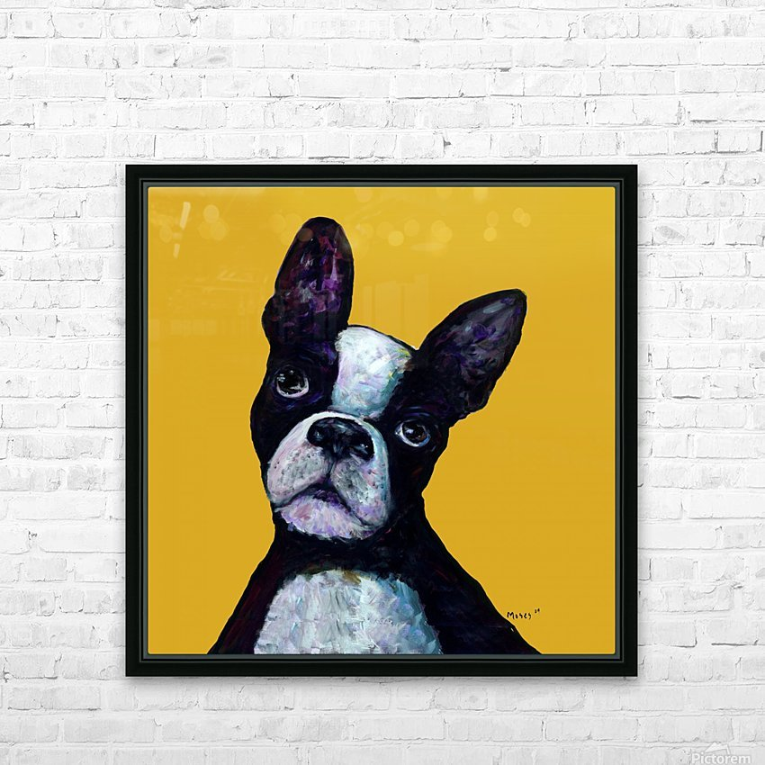 BOSTON TERRIER ON YELLOW HD Sublimation Metal print with Decorating Float Frame (BOX)