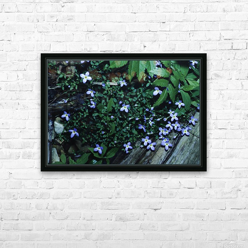 Little Bluets  HD Sublimation Metal print with Decorating Float Frame (BOX)