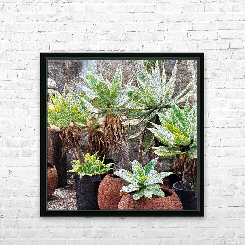 Potted Agave Plant HD Sublimation Metal print with Decorating Float Frame (BOX)