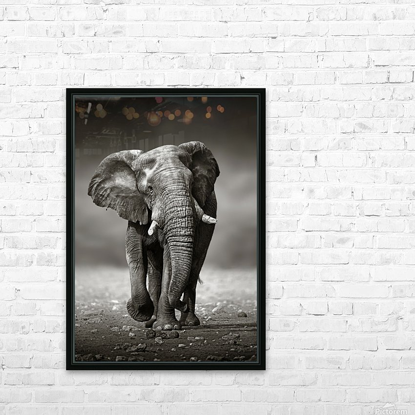 Elephant approach from the front HD Sublimation Metal print with Decorating Float Frame (BOX)