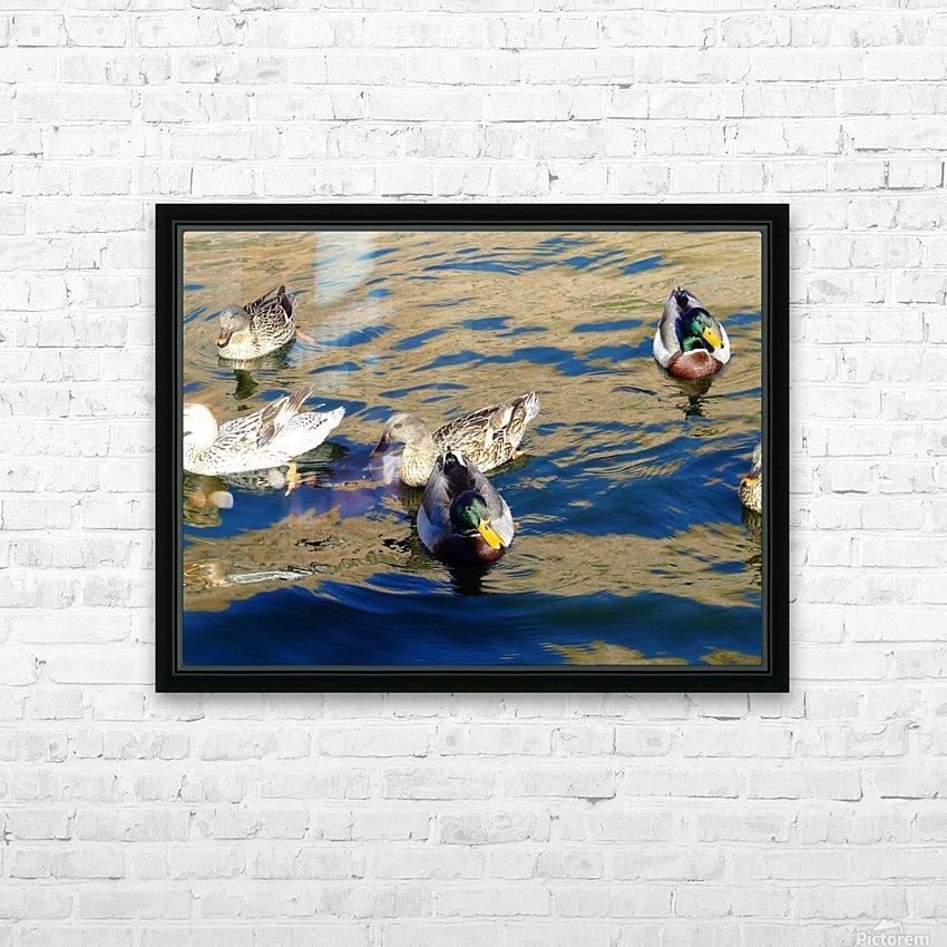 Ducks on Saguaro Lake  HD sublimation métal imprimé avec décoration flotteur cadre (boîte)