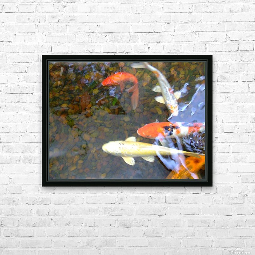 Koi Fish In Home Pond  HD Sublimation Metal print with Decorating Float Frame (BOX)
