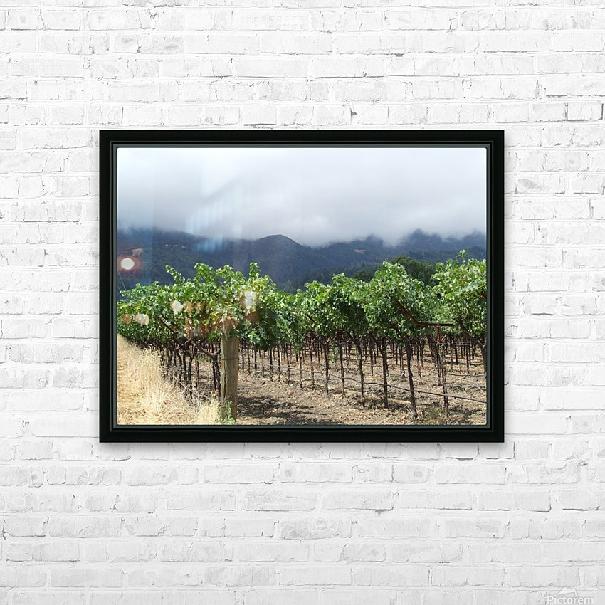 Napa Califoria Grape Vines summer 2007  HD Sublimation Metal print with Decorating Float Frame (BOX)
