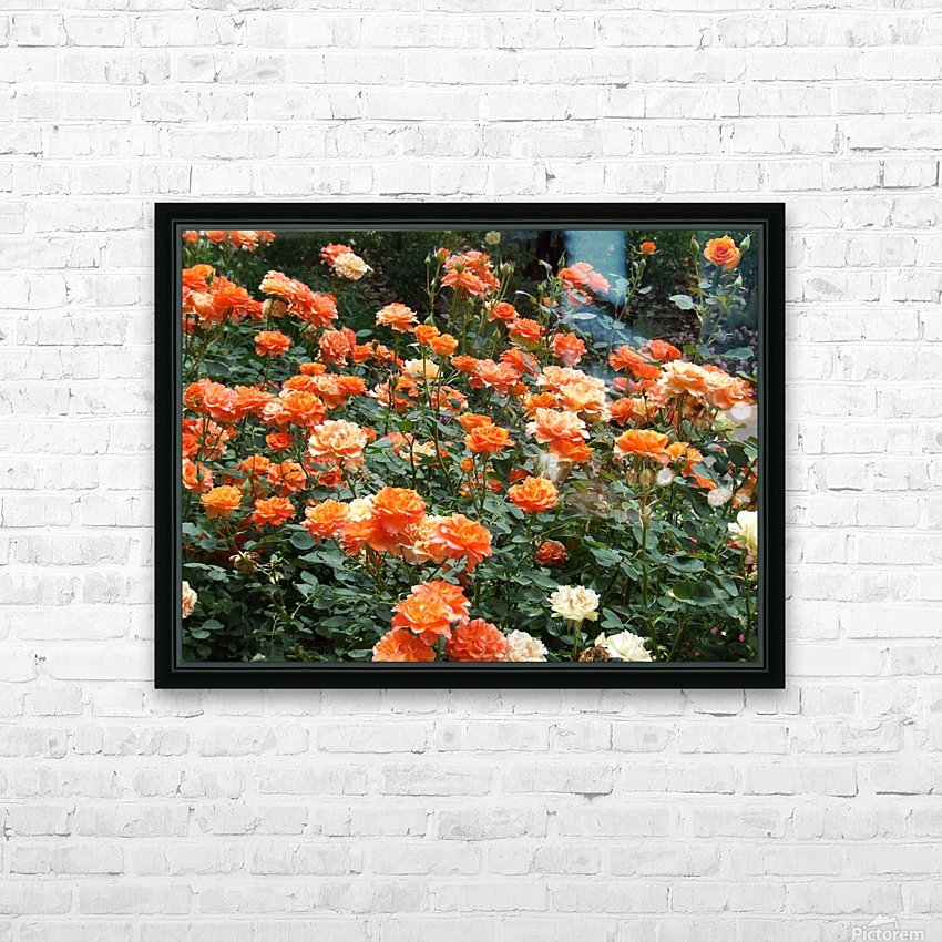 Orange Flowers Growing in Napa Califoria  HD Sublimation Metal print with Decorating Float Frame (BOX)