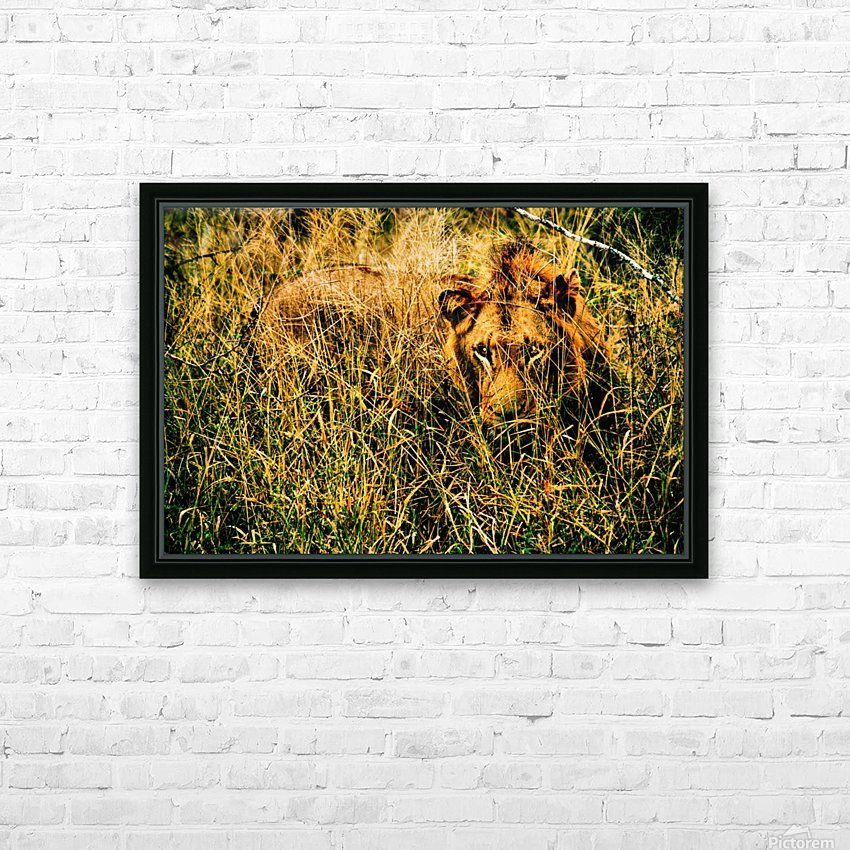 Safari Lion Days 1 HD Sublimation Metal print with Decorating Float Frame (BOX)