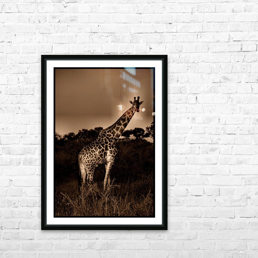 Giraffe Senegal HD Sublimation Metal print with Decorating Float Frame (BOX)