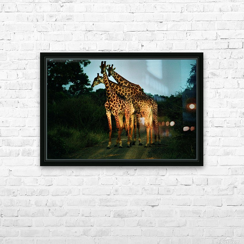 Giraffes HD Sublimation Metal print with Decorating Float Frame (BOX)