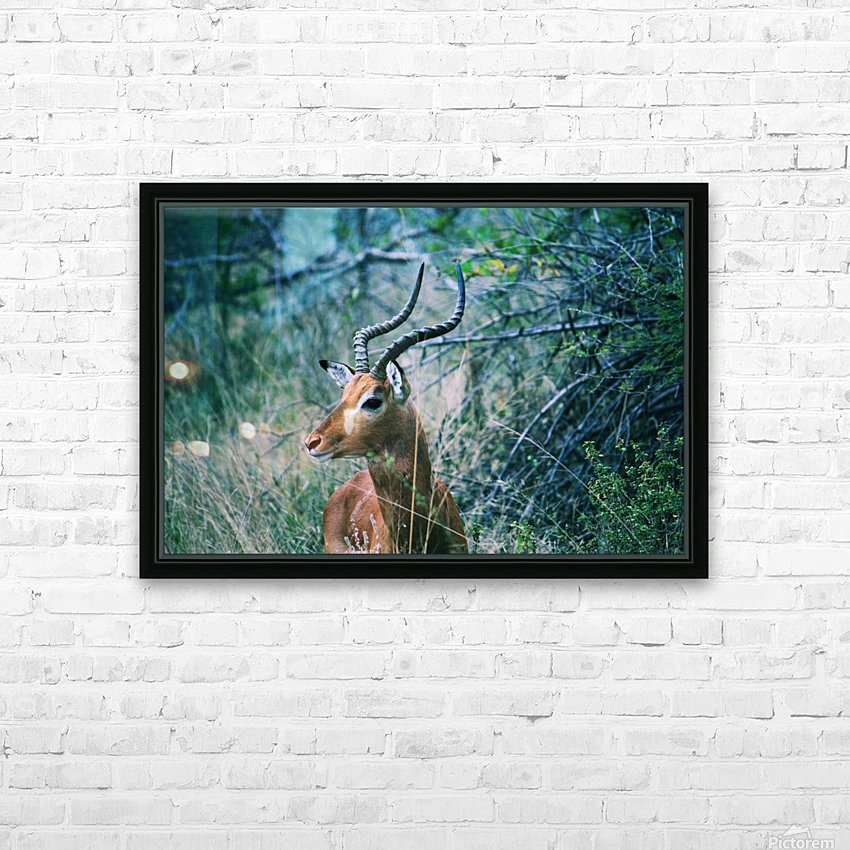 African Game HD Sublimation Metal print with Decorating Float Frame (BOX)