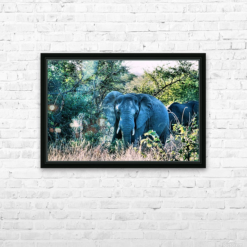 Elephant HD Sublimation Metal print with Decorating Float Frame (BOX)