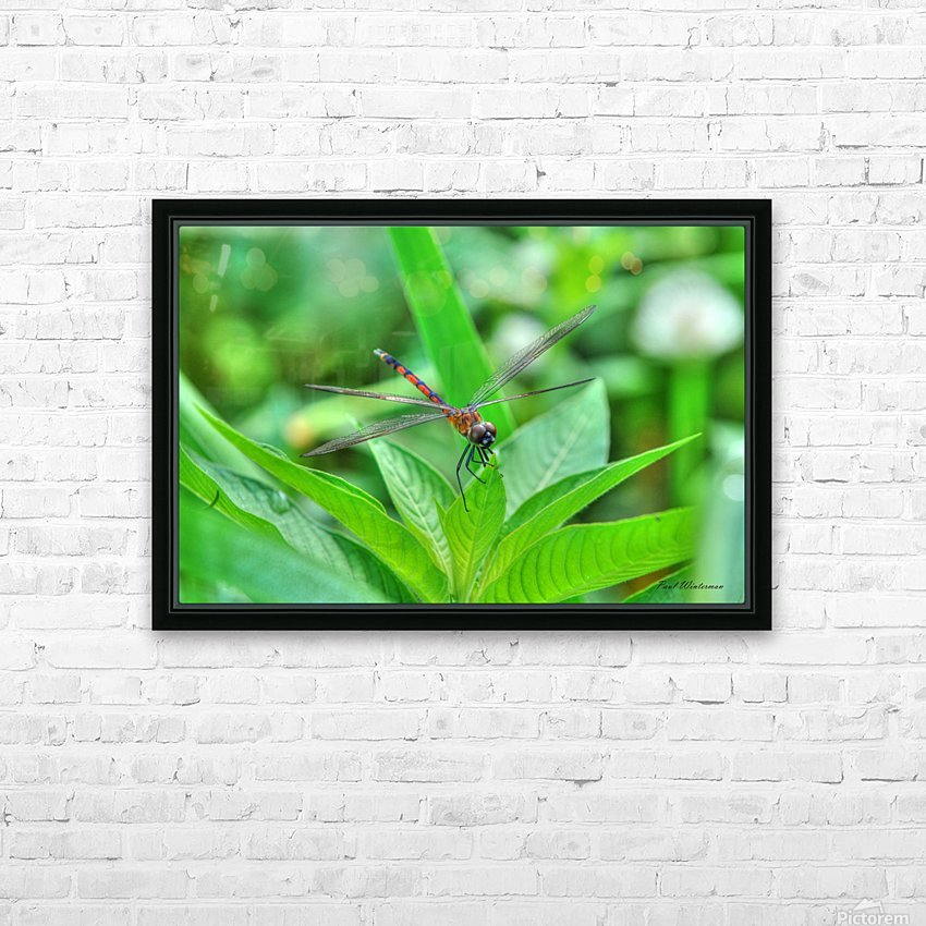 12-4 Orange Dragonfly HD Sublimation Metal print with Decorating Float Frame (BOX)
