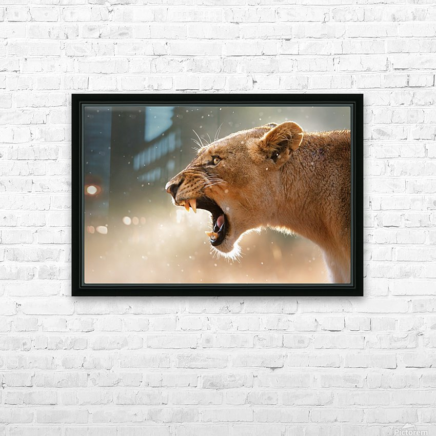Lioness in the rain HD Sublimation Metal print with Decorating Float Frame (BOX)