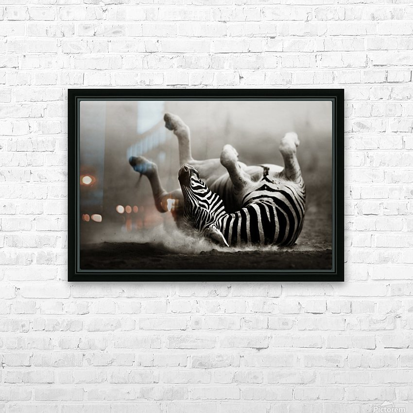 Zebra rolling in the dust HD Sublimation Metal print with Decorating Float Frame (BOX)