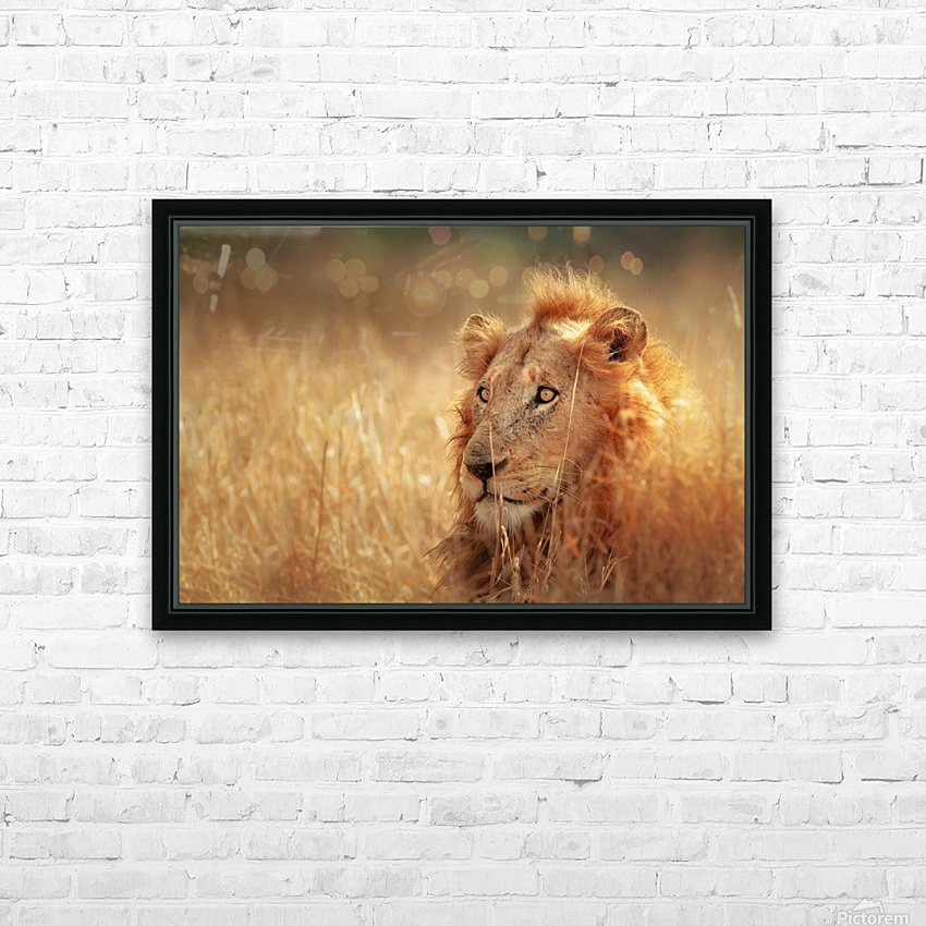 Lion in grassland HD Sublimation Metal print with Decorating Float Frame (BOX)