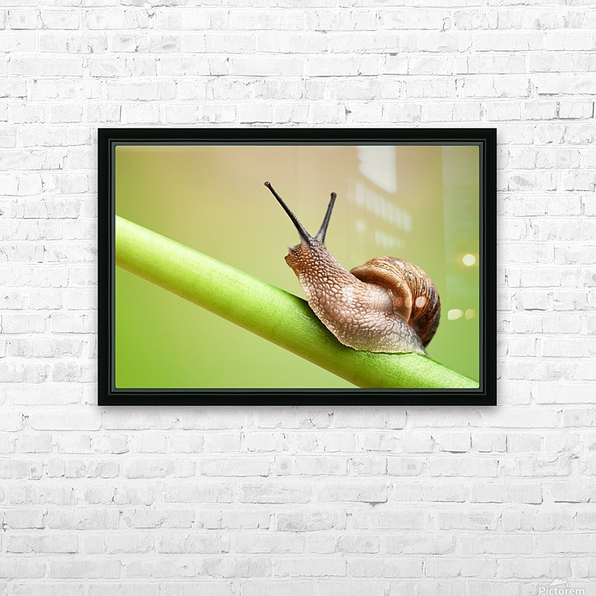 Snail on green stem HD Sublimation Metal print with Decorating Float Frame (BOX)