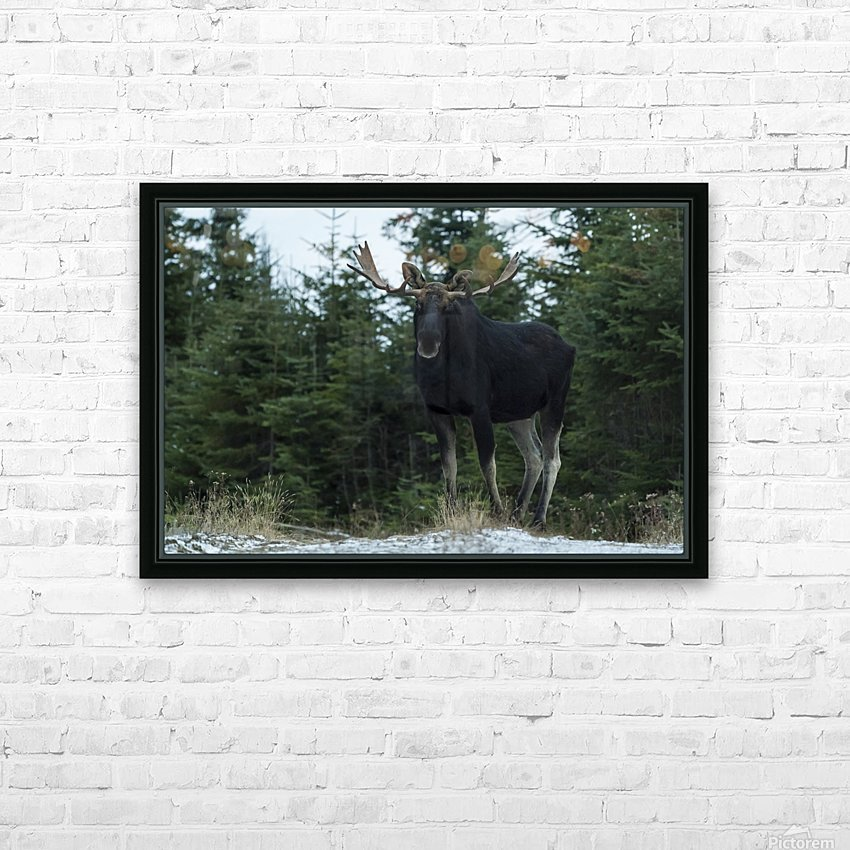 Le roi des forets HD Sublimation Metal print with Decorating Float Frame (BOX)