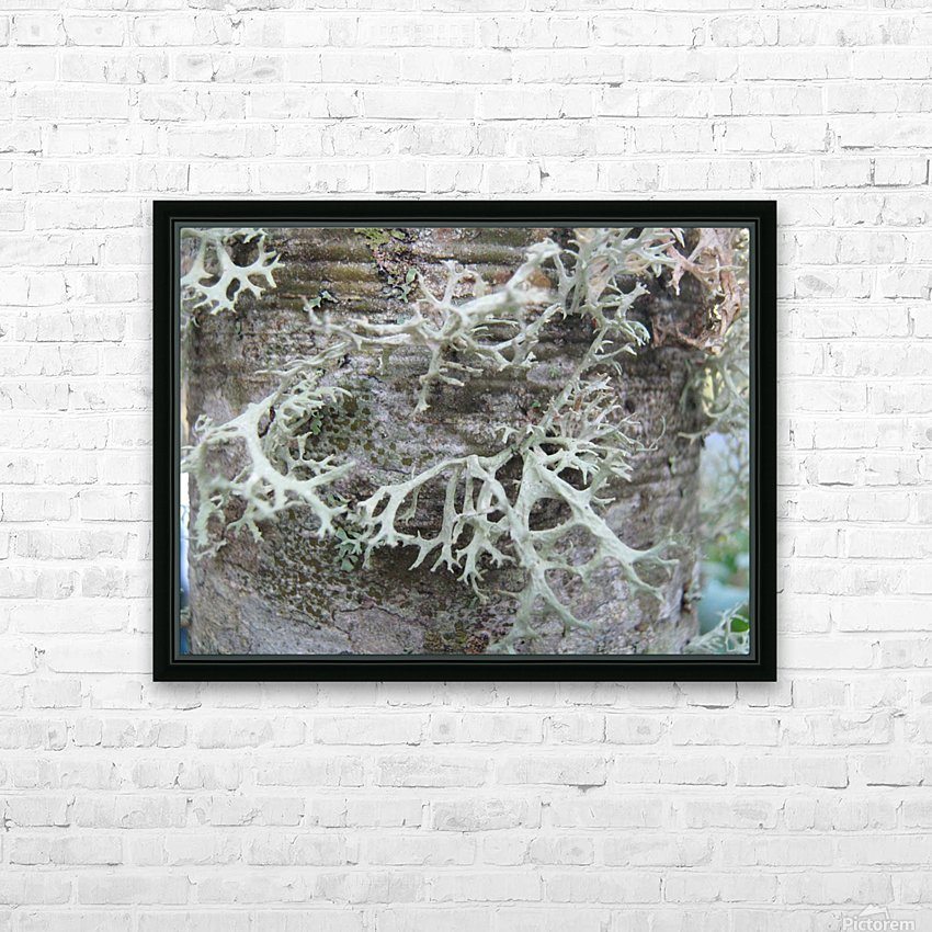 Bark With Lichen 02 HD Sublimation Metal print with Decorating Float Frame (BOX)