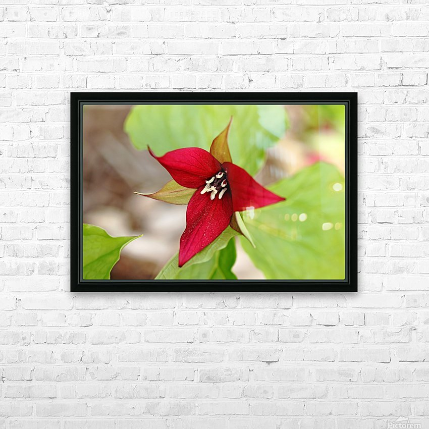 Red Trillium HD Sublimation Metal print with Decorating Float Frame (BOX)
