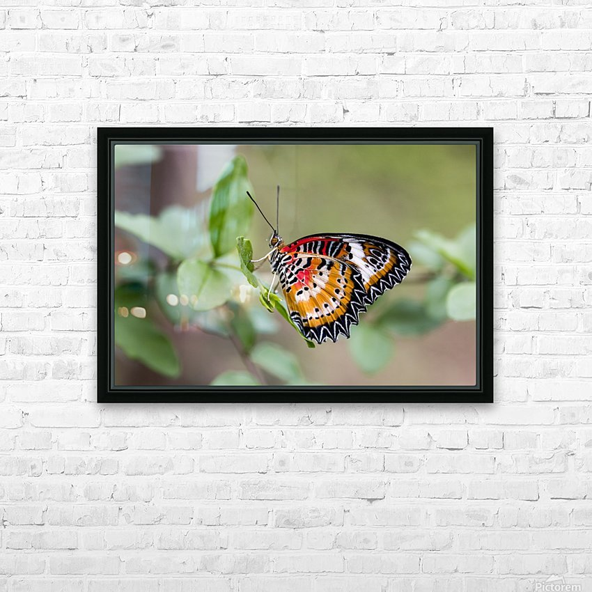 Leopard lacewing  HD Sublimation Metal print with Decorating Float Frame (BOX)