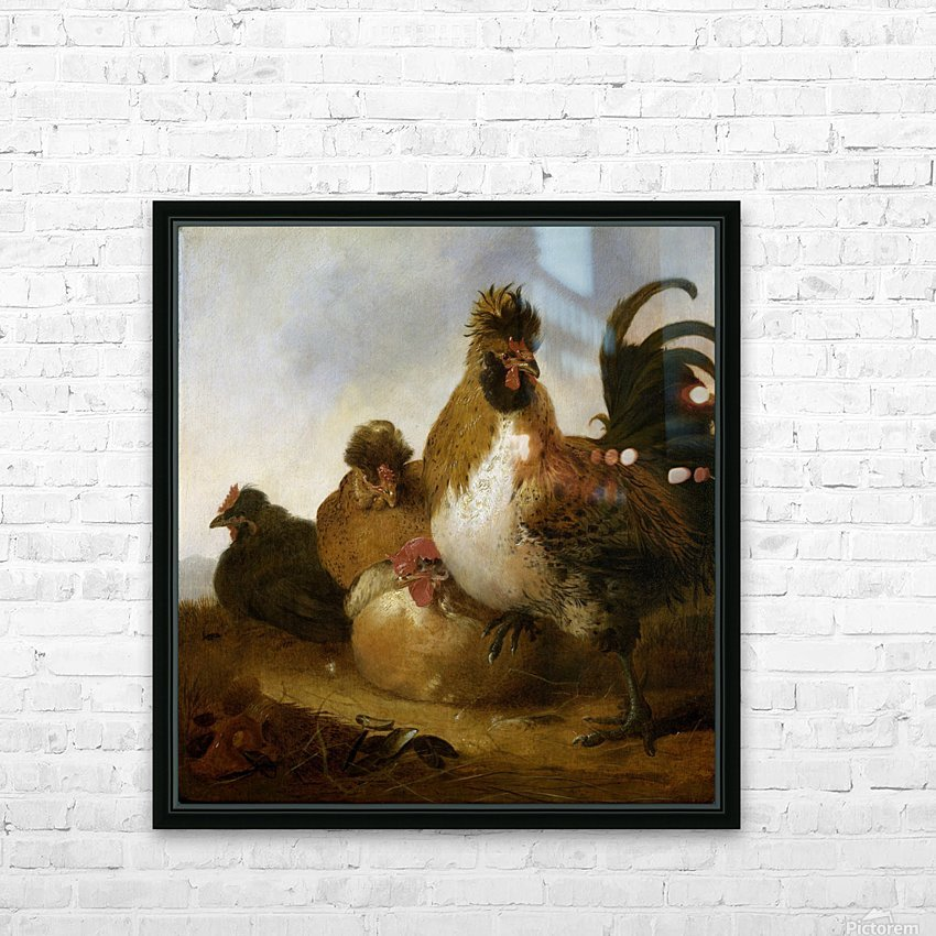 Aelbert Cuyp Rooster HD Sublimation Metal print with Decorating Float Frame (BOX)