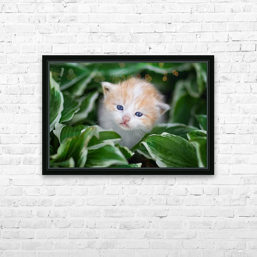 Orange Kitten HD Sublimation Metal print with Decorating Float Frame (BOX)