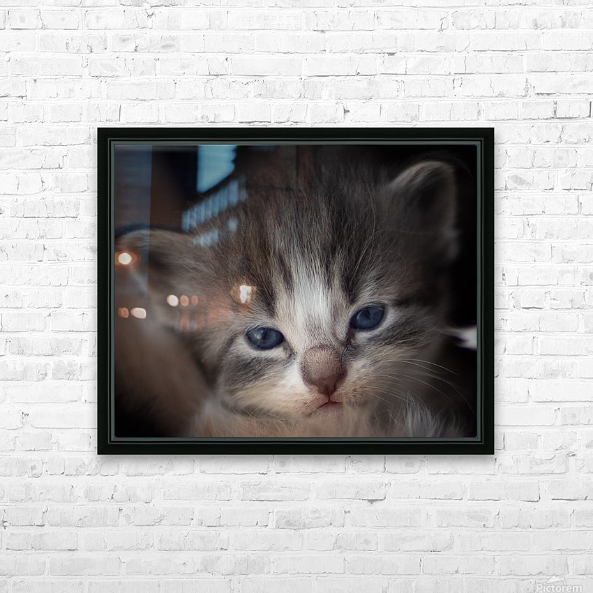 Kitten Face HD Sublimation Metal print with Decorating Float Frame (BOX)