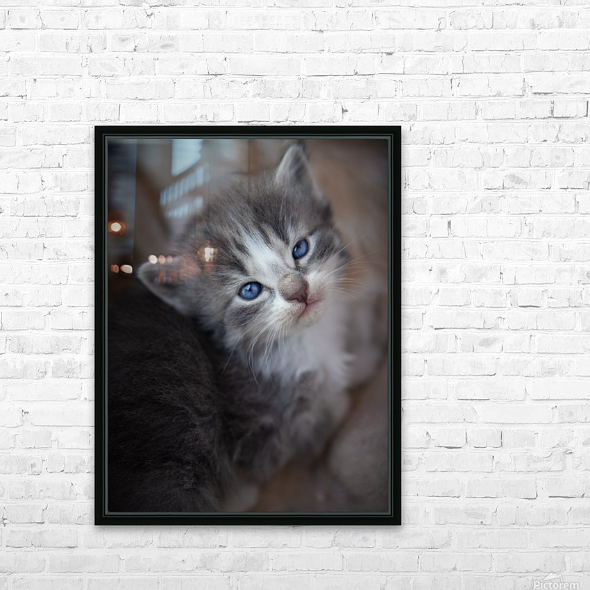 Gray Kitten HD Sublimation Metal print with Decorating Float Frame (BOX)