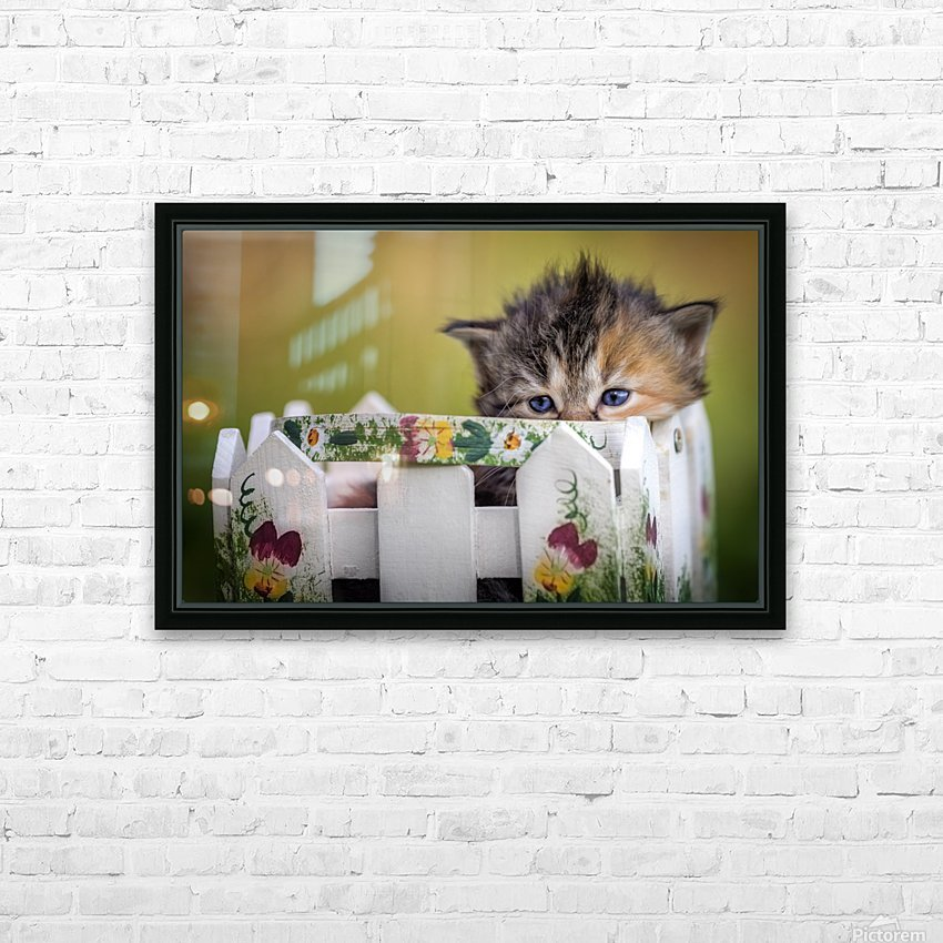 Kitten in basket HD Sublimation Metal print with Decorating Float Frame (BOX)