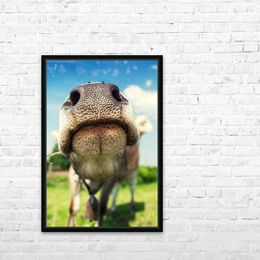 funny nose of a curious cow HD Sublimation Metal print with Decorating Float Frame (BOX)