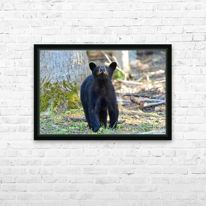 2506-Nose in the air HD Sublimation Metal print with Decorating Float Frame (BOX)