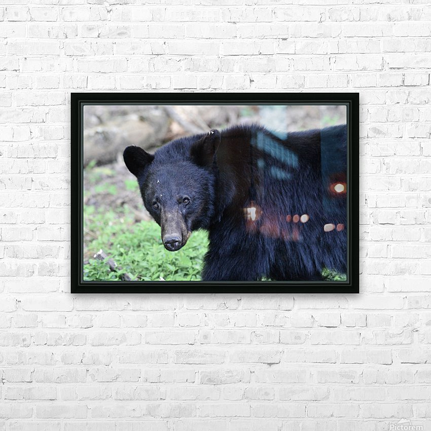 2350- black bear HD Sublimation Metal print with Decorating Float Frame (BOX)