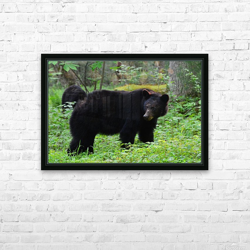 3299-Black Bear HD Sublimation Metal print with Decorating Float Frame (BOX)
