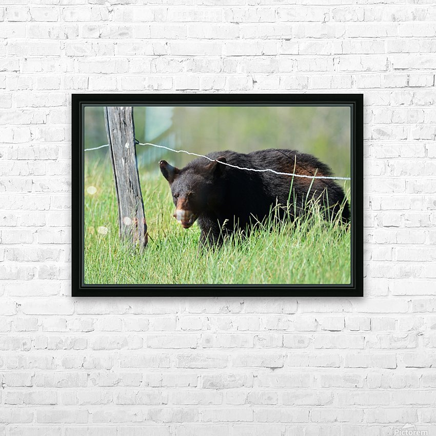 2966-Black Bear HD Sublimation Metal print with Decorating Float Frame (BOX)