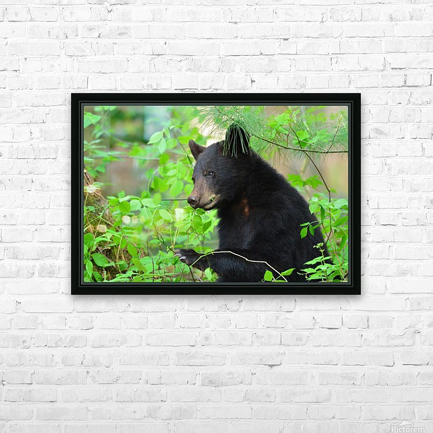 3646-Bear Lunch HD Sublimation Metal print with Decorating Float Frame (BOX)