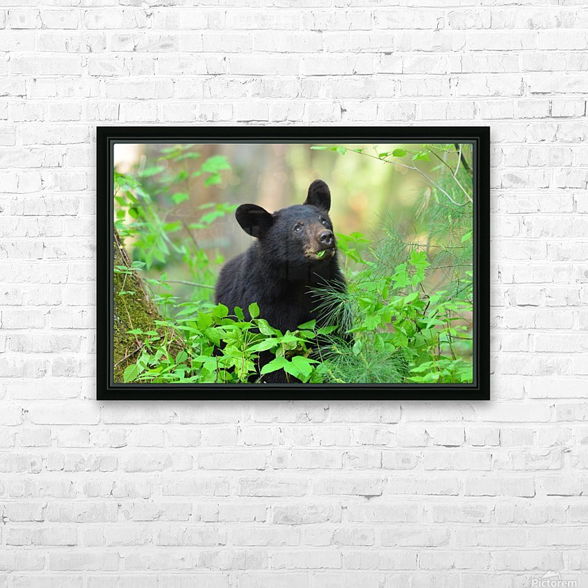 3597-Black Bear HD Sublimation Metal print with Decorating Float Frame (BOX)