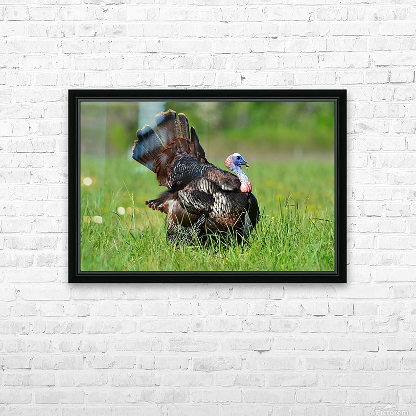 12_Strutting Tom HD Sublimation Metal print with Decorating Float Frame (BOX)