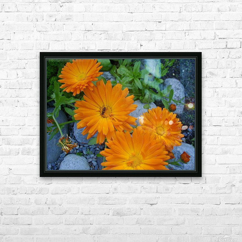Orange Daisies & Bee HD Sublimation Metal print with Decorating Float Frame (BOX)
