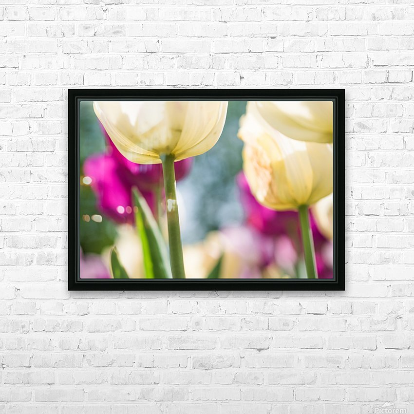 Under The Tulips - Sous Les Tulipes HD Sublimation Metal print with Decorating Float Frame (BOX)
