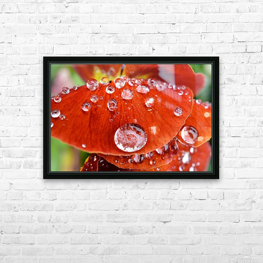 Raindrops On Orange Pansy Petal Photograph HD Sublimation Metal print with Decorating Float Frame (BOX)